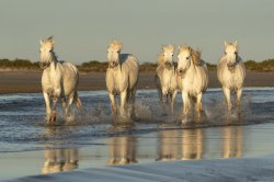 Captivating Camargue, France